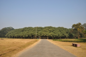 the_great_banyan_tree